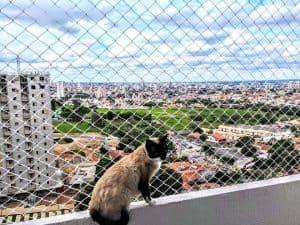 redes-de-protecao-para-gatos